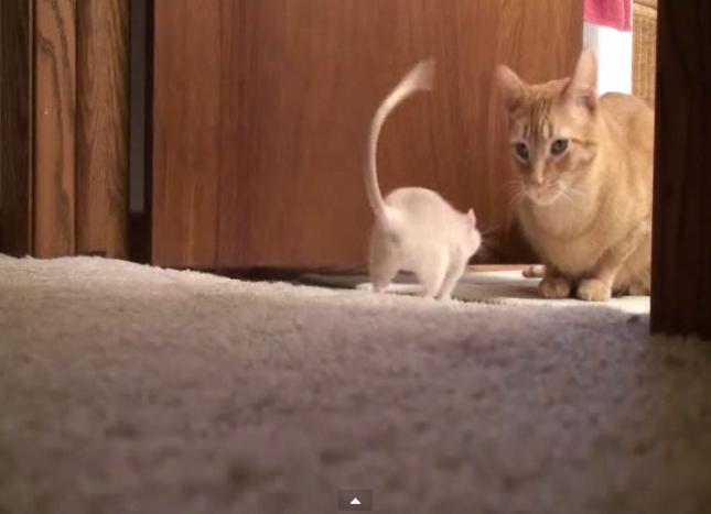 大好きな猫を発見したねずみ!