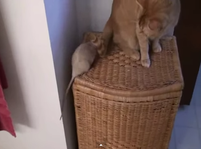 猫の行く場所全てについていきます!