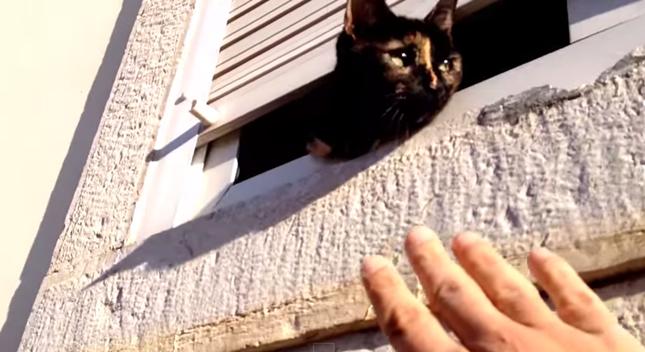 遊んでくれたサビ猫さん。