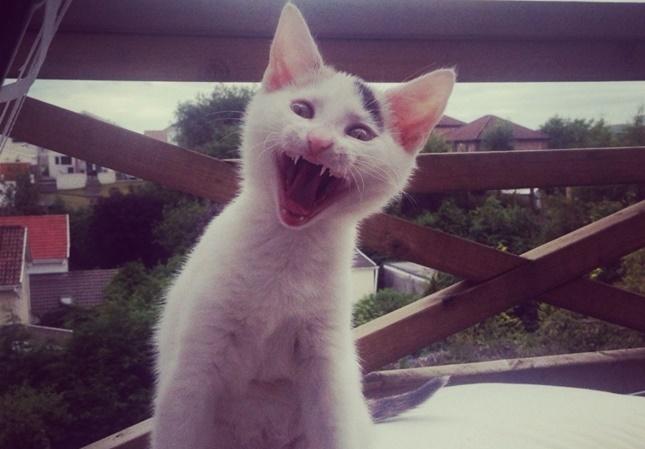 やんちゃな子猫