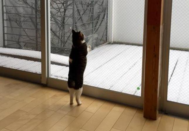 雪にかぶりつく猫