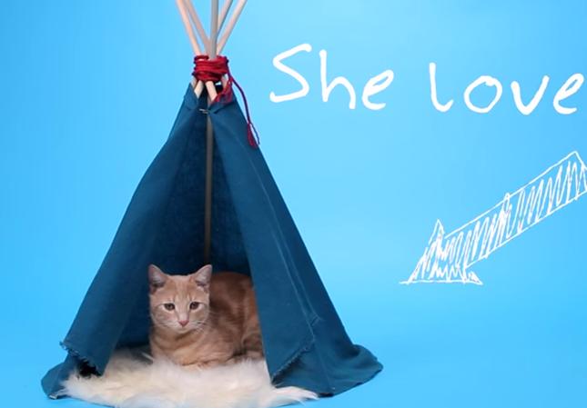 手作り猫用テント