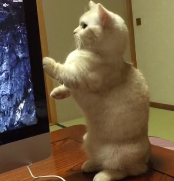 めちゃくちゃ猫背が・・・