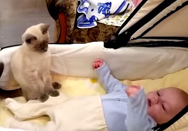 赤ちゃんを見守るシャム猫。