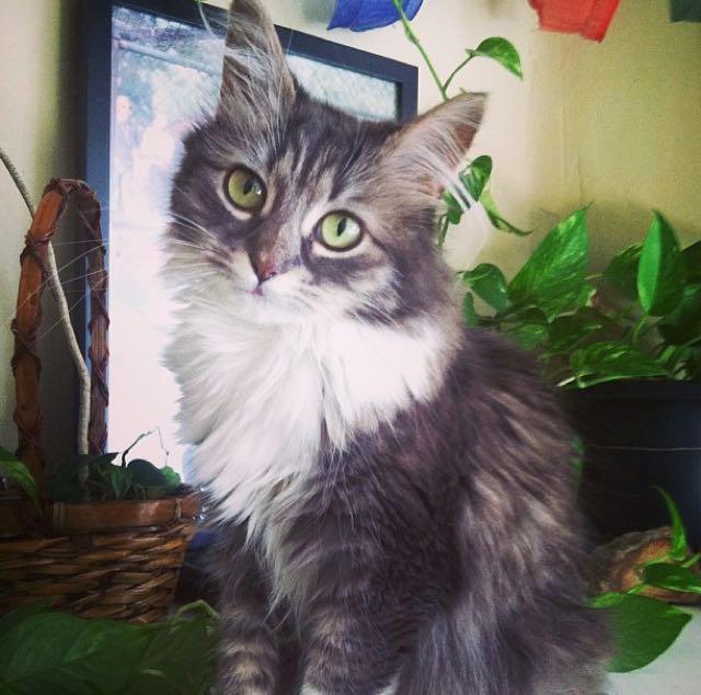 美猫さんです!