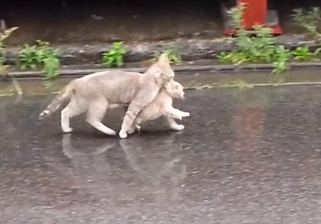 雨の日、足早に変える猫の親子。