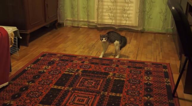 猫背MAX!