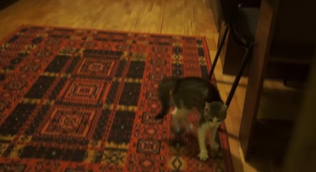 ビックリ猫背で歩くネコ。