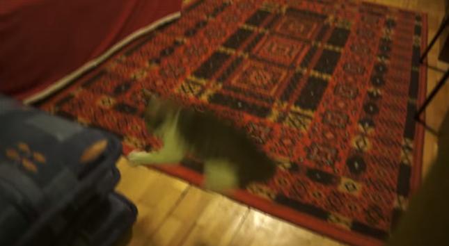 ビックリしすぎたネコの残像。