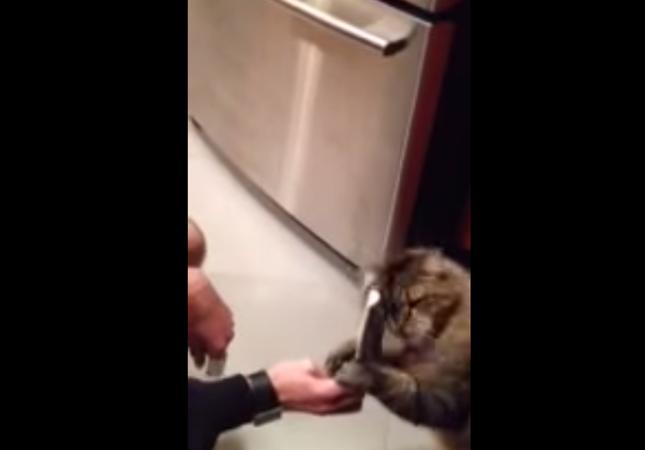 ブラッシング大好き猫