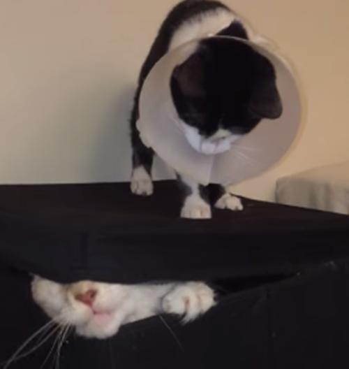 徐々に本気になる猫。