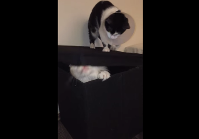 ボックスから大脱走する猫。