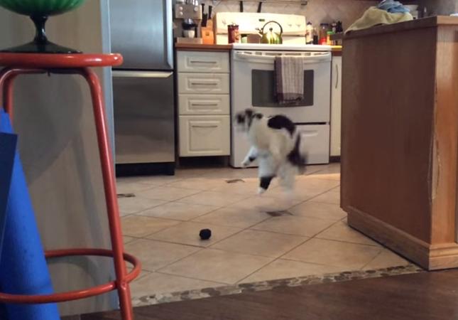テイラー・スウィフトにノリノリで踊る猫
