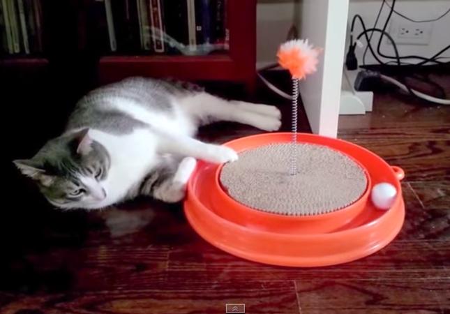 ダルいけどちょっと遊びたい猫