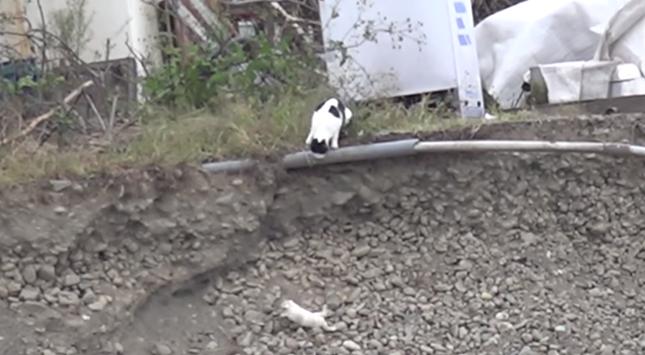 ジャンプで滑り、転げ落ちてしまう子猫。