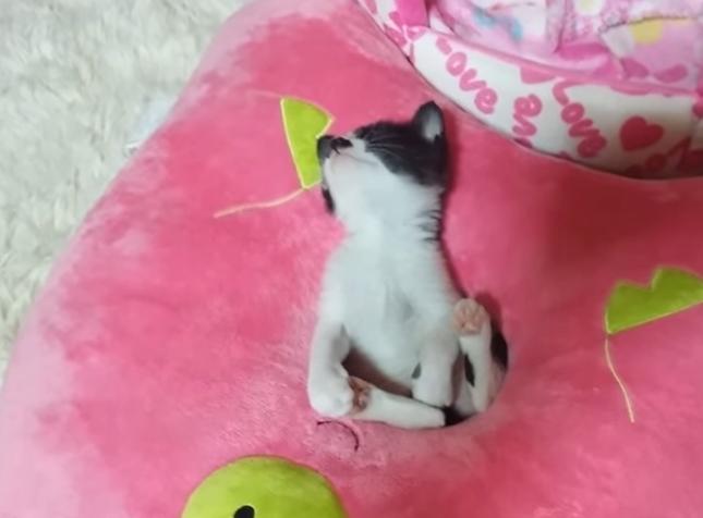 穴にハマり寝ている子猫。