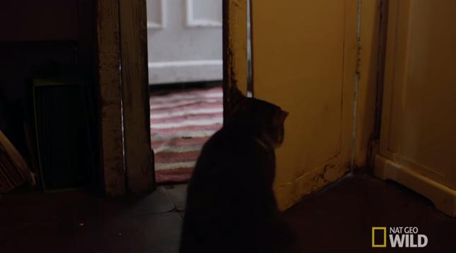 ドアを開けてあげる猫。