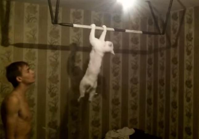 筋トレと猫