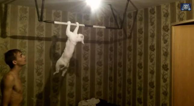 ぶら下がる猫。