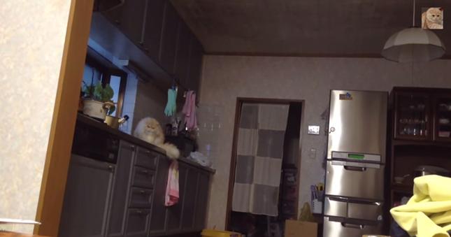 キッチンに猫。
