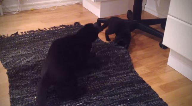 母猫も楽しそうに参加!