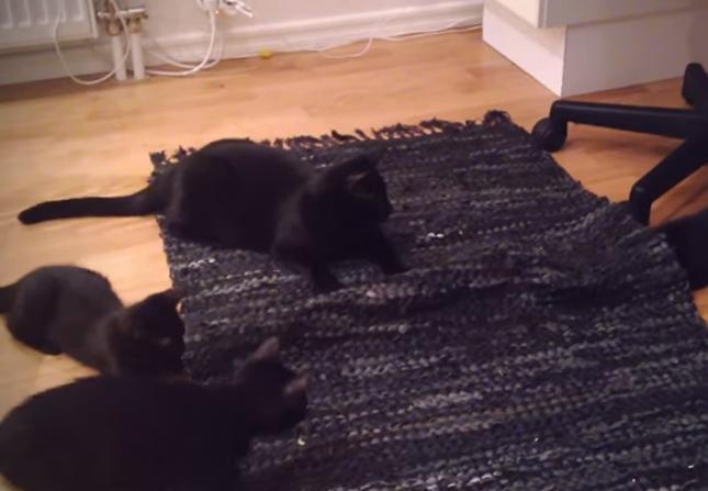 黒猫ファミリーの一家団欒隠れんぼ大会