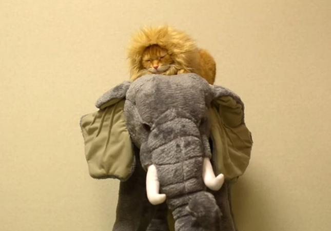 象上でスヤスヤ眠る猫ライオン。