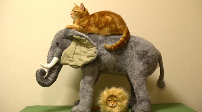 仲良く象でリラックス。