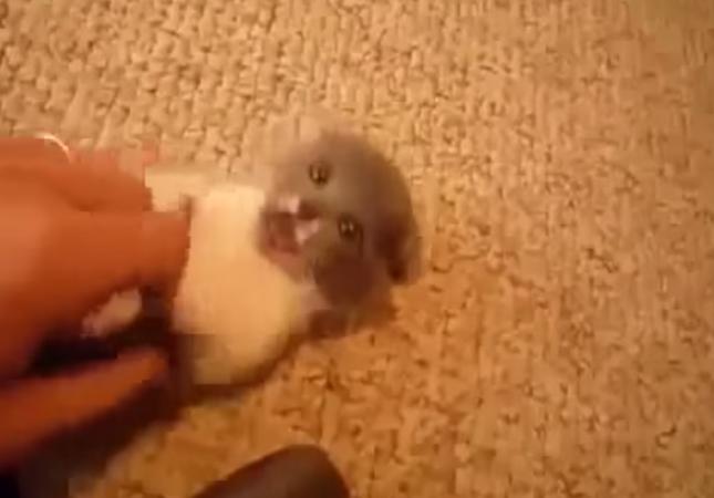 ムキになって遊ぶ子猫が可愛い。