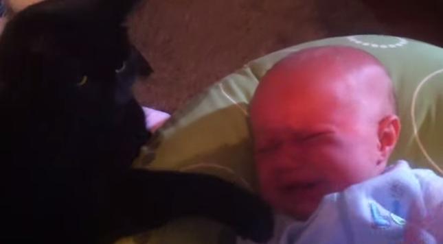 泣いている赤ちゃんに寄り添う黒猫。