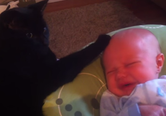 黒猫と赤ちゃん