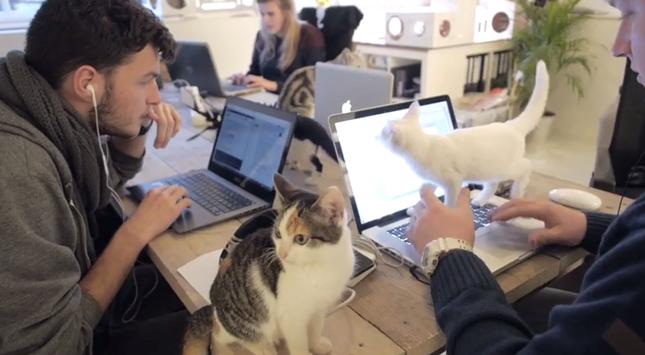働く人々、見守る猫々。