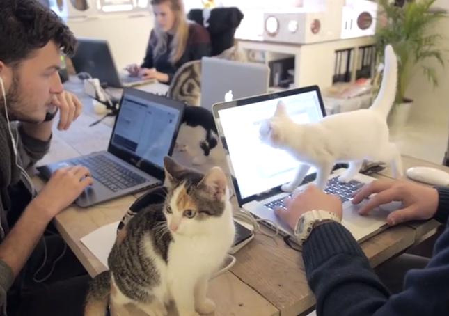 猫オフィス