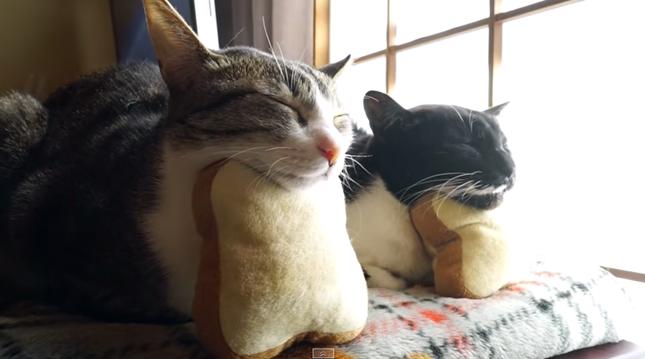 パン猫友あらわる!