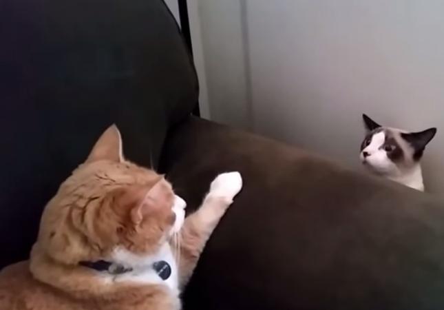 おっかなビックリな猫