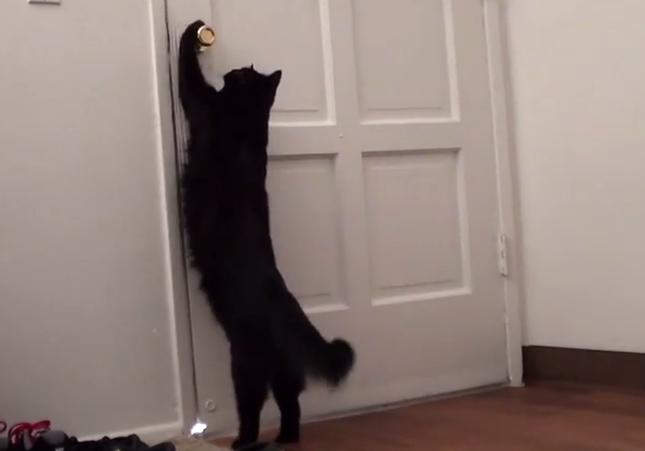 散歩に行きたい黒猫