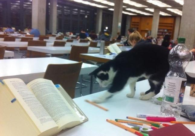 大学生猫pep