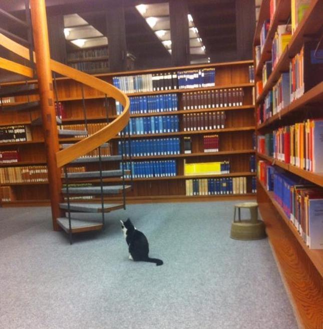 図書室で思考にふける。