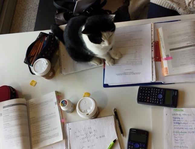 一緒に勉学にも励む。