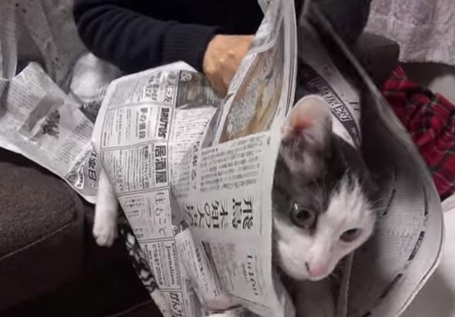 新聞にどうしても乗りたい猫