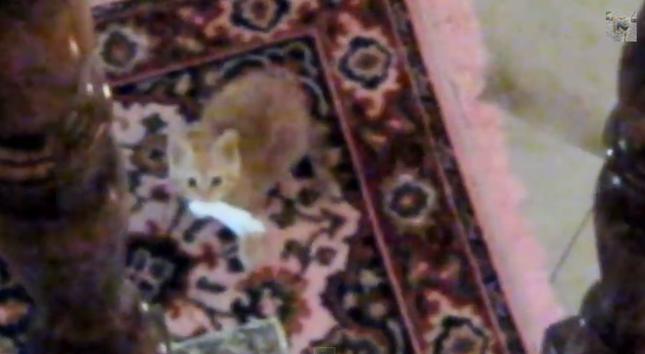 戦利品をゲットしたドヤ顔子猫