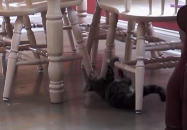 雲梯遊びにハマッた猫。