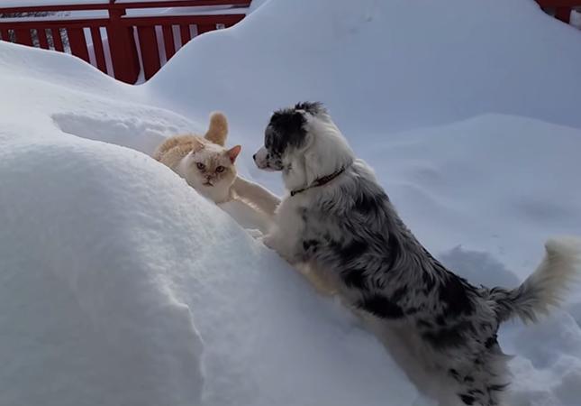 雪の中じゃれあう犬と猫。