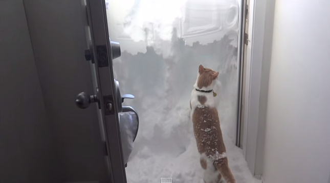 頑張って雪かきをするニャンコ!
