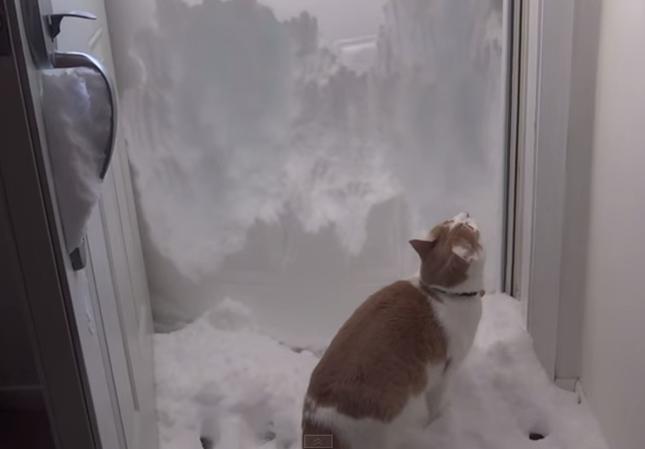 雪かきニャンコ!
