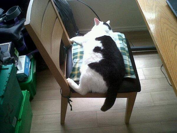 しがみつく黒猫さん!