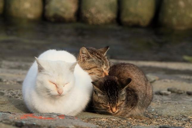 ほんわか猫島風景。