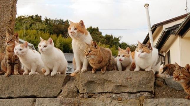 見つめる島猫達。