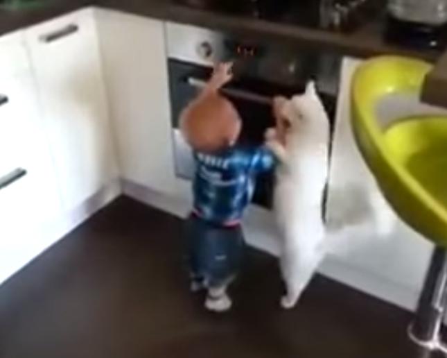 白猫「熱いからダメ!」