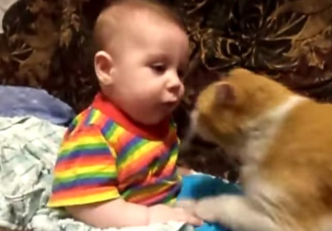 赤ちゃんと猫。